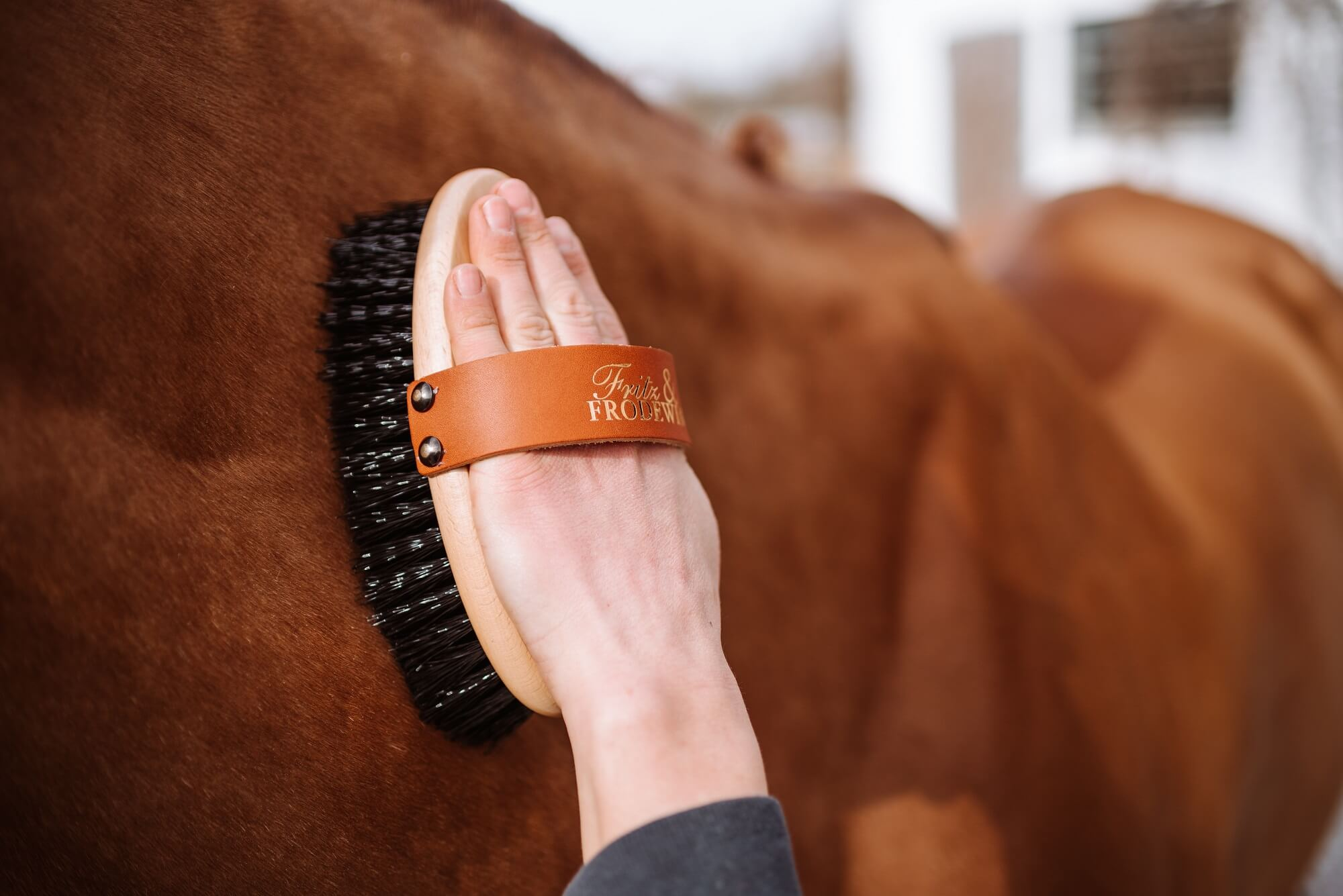 Fellwechsel beim Pferd: Alle wichtigen Facts und Tipps