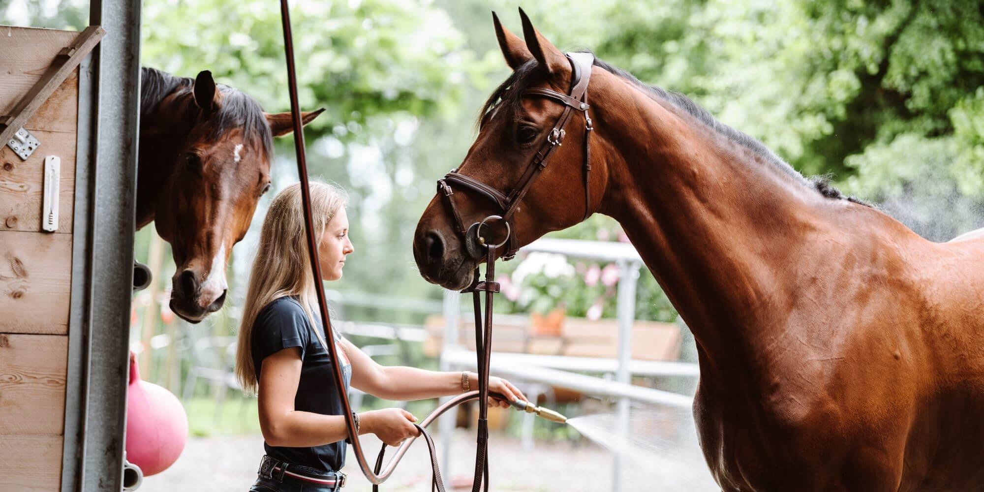 Pferde waschen & abspritzen - So wäschst du dein Pferd richtig