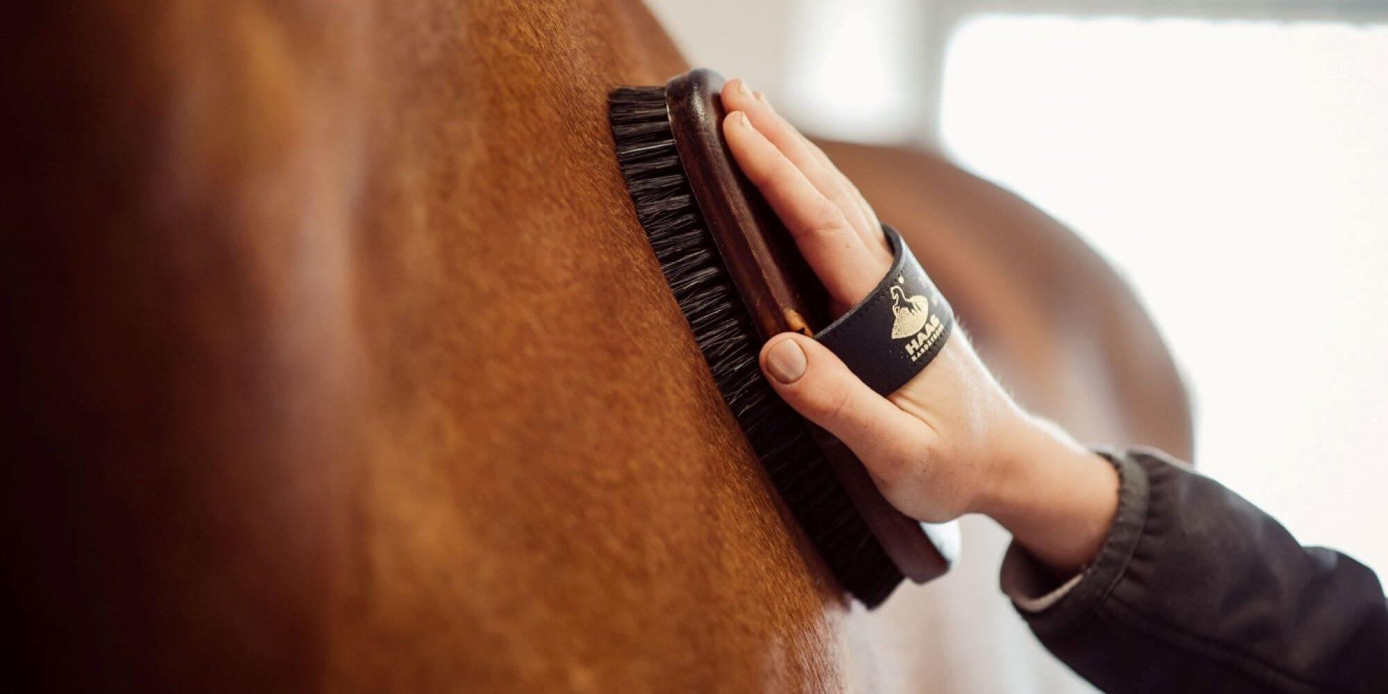 Pferdepflege: das richtige Zubehör und nützliche Tipps